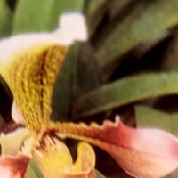 gaby-orquidea